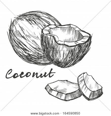coconut set hand drawn vector illustration realistic sketch