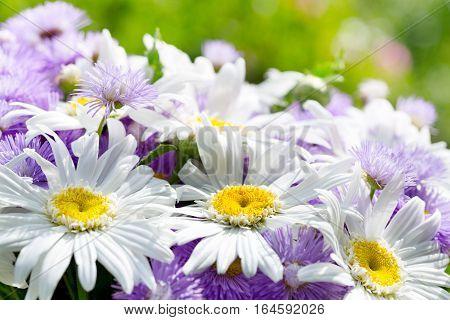 bunch of daisy flowers in a garen