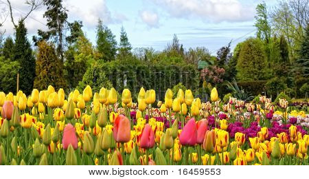 Colorful flowerbeds