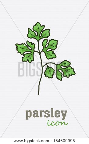 Parsley vector icon. Vegetable green leaves. Greenery. Culinary herb spice for cooking, medical, gardening design. Organic product flavor ingredient for label, sign, illustration