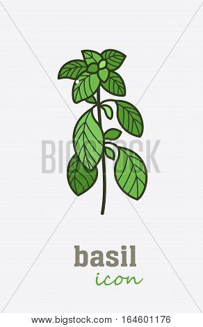 Basil vector icon. Vegetable green leaves. Greenery. Culinary herb spice for cooking, medical, gardening design. Organic product flavor ingredient for label, sign, illustration