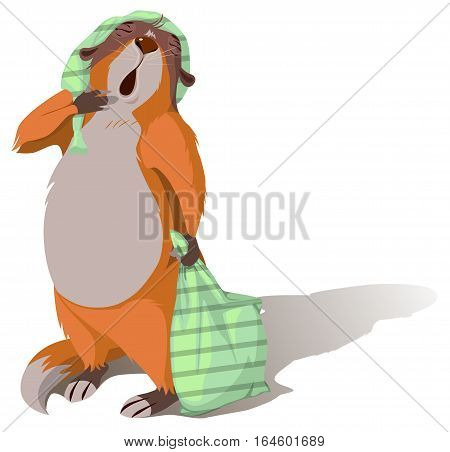 Groundhog Day. Sleeping marmot yawning and holding pillow. Vector cartoon illustration