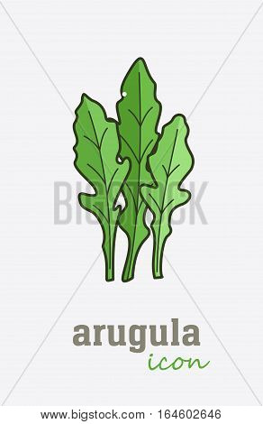 Arugula vector icon. Vegetable green leaves. Greenery. Culinary herb spice for cooking, medical, gardening design. Organic product flavor ingredient for label, sign, illustration