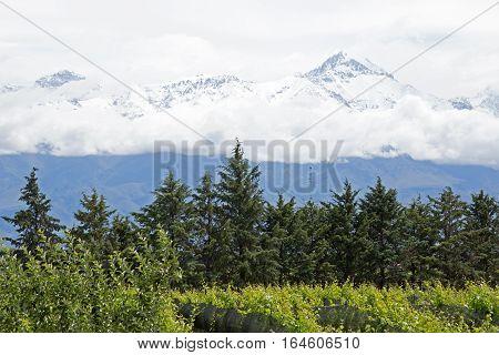 Cloudy Andes & Vineyard, Uco Valley, Mendoza