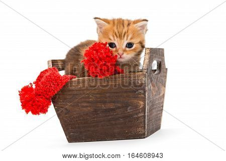 Little kitten British marbled sits in a wooden box isolated on white