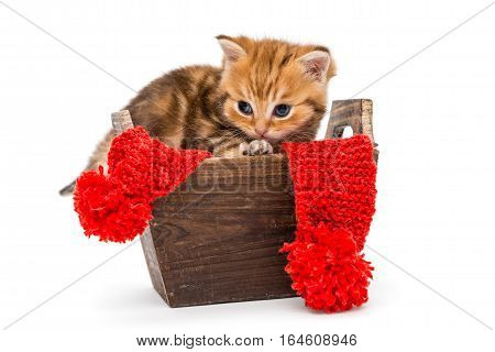Little kitten British marbld sits in a wooden box isolated on white