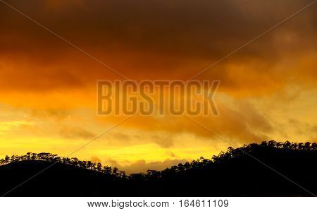 Dalat Countryside In Sunset With Row Of Tree