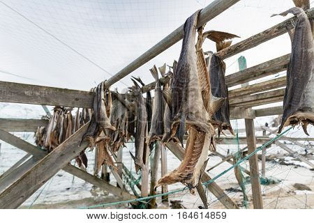 Dried Salmon In Norway