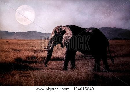 African Elephant in the savannah on the background of the moon. Africa. Tanzania.