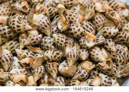 Heap Of Live Sea Snails In Market, Delicacy Among Chinese