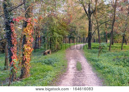 Pedestrian and bicycle track along the Lambro river Monza Brianza Lombardy Italy) at fall. Woods