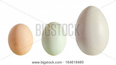 Collection of eggs large white goose egg light green duck egg light brown chicken egg isolated on white background close up
