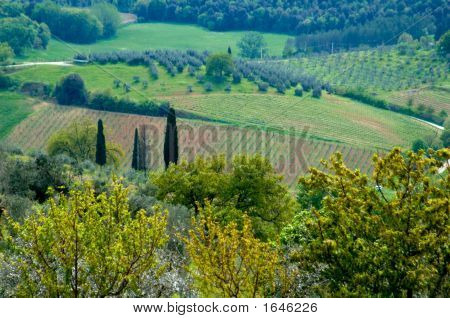 Italian Fields