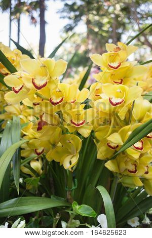 Beautiful yellow orchid flower blooming stock photo