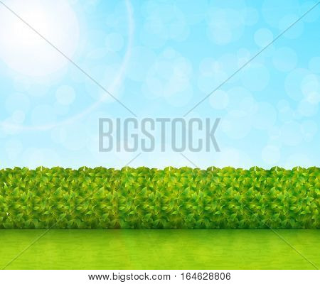 Garden background with green grass and blue sky vector