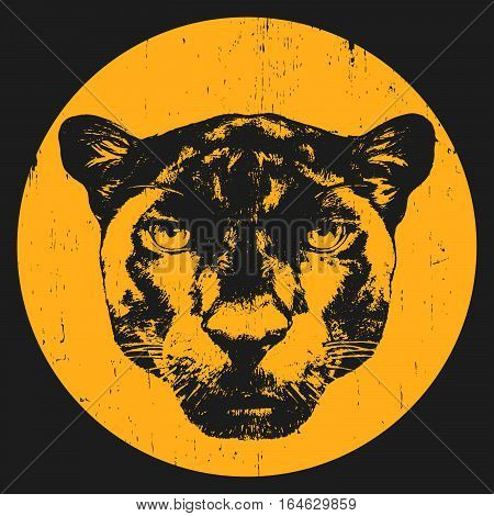Portrait of Panther. Hand drawn illustration. Vector.