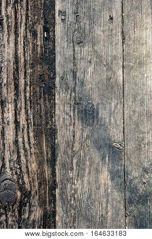 Wood Texture Of Cutted Tree Planks. Moss And Fungus Growing On The Old Fence.