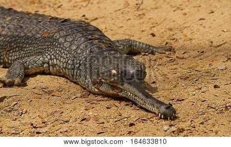 photo study of a crocodile basking in the sunshine
