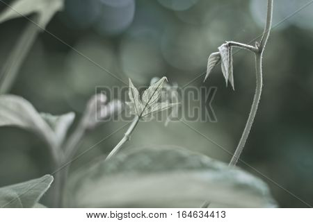 Wild vegetation in the tropical forest. Concept of green earth.