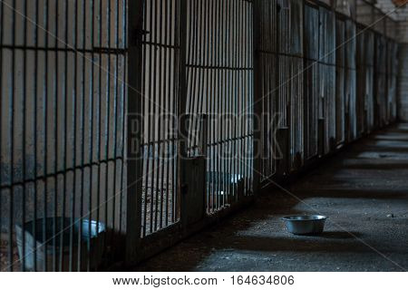 Several cages in a shelter for homeless animals