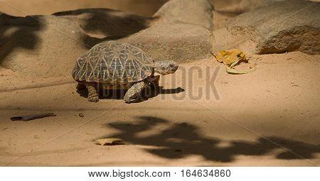 photo of a tortoise walking in the sun shine
