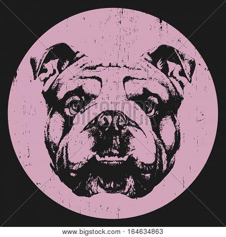 Portrait of English Bulldog. Hand drawn illustration. Vector.