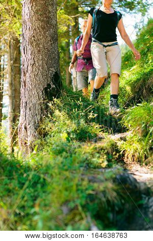 A senior couple is hiking through the forest.