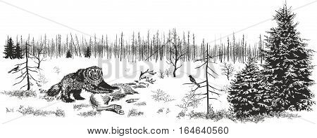 Picture representing northern wood and a glutton at the fallen deer.