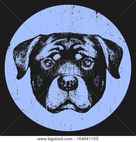 Portrait of Rottweiler. Hand drawn illustration. Vector