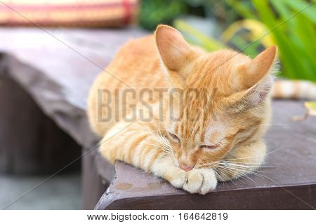 Cute cat cat lying on the wooden floor in the background blurred close up playful cats cats relaxing vacation.