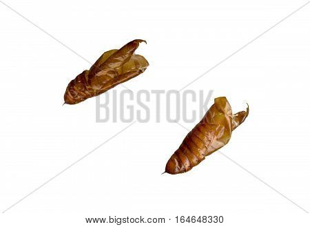 Two sides of caterpillar cocoon on a white background