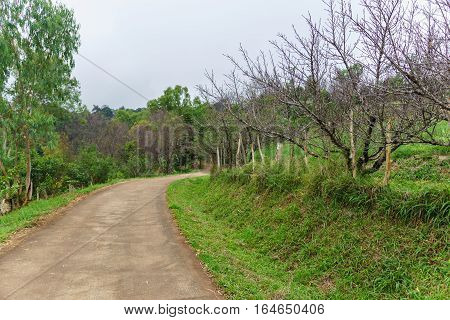 Rural pathway with a peach tree and a roadside grass with green nature background.