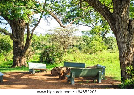 Eating And Resting Place Under A Huge African Tree