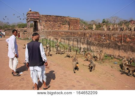 Ranthambore, India - February 2: Unidentified Men Stand Near Langurs On February 2, 2011 In Ranthamb