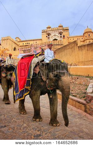 Amber, India - March 1: Unidentified Man Rides Decorated Elephants From Amber Fort On March 1, 2011