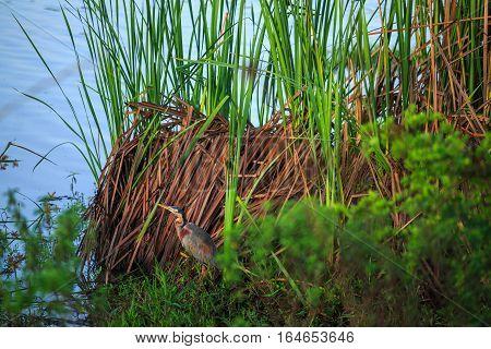 Beautiful African Bird By The Water, Kenya