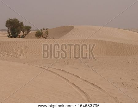 The Sahara -- the largest hot desert on the earth located in the north of the African continent.