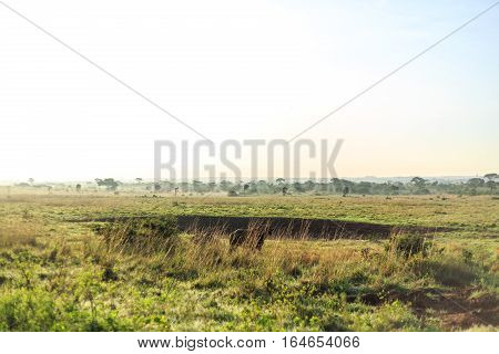 Savannah Landscape With A Few Grazing Buffaloes