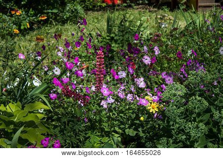 Flowers In The Garden