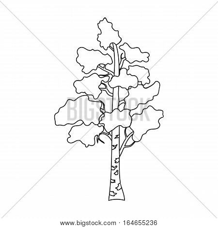 Birch tree icon in outline design isolated on white background. Russian country symbol stock vector illustration.