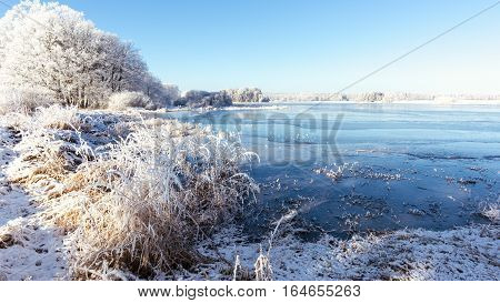 Frozen Pond With Several Trees And Reed On Side