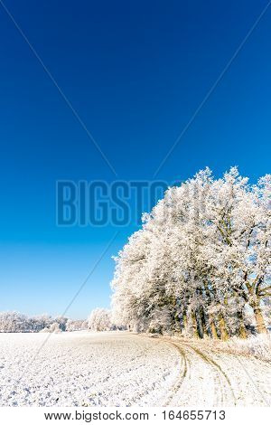Several Frosted Trees Next To Meadow Covered By Snow