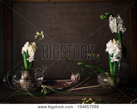 still life with three hyacinths and freesias in glass vases .