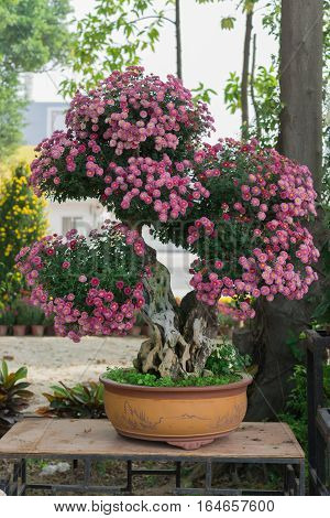 bonsai tree with lilac chrysanthemum flowers vertical
