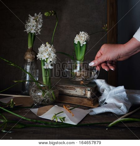 three white hyacinth and freesia in transparent vases, a female hand on dark background.