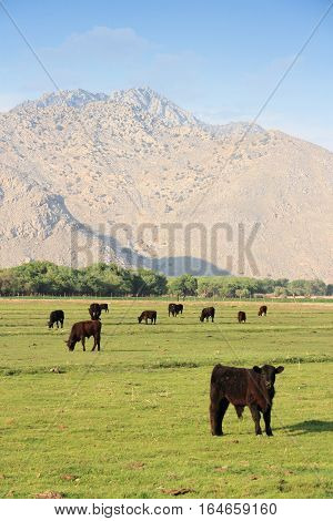 Usa Cattle Ranch