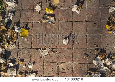 Stamped concrete pavement outdoor flooring with natural leaves, decorative appearance of red tiling, mimics colors and textures of material pavers, red tiles pattern, top view