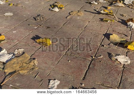 Detail of natural stamped concrete pavement outdoor flooring with leaves, decorative appearance of tiling, mimics colors and textures of material pavers, red tiles pattern
