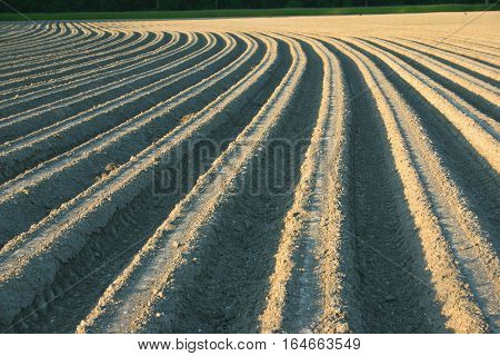 Farmland. Furrows on agricultural land. The Flanders, Belgium.