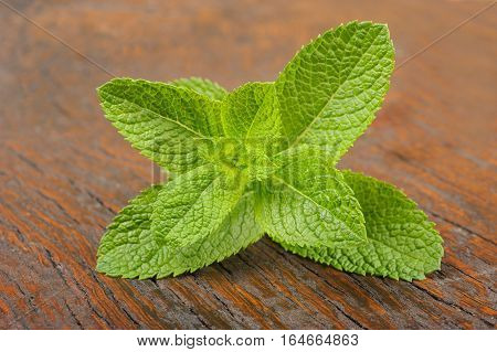Fresh mint sprig on a wood background